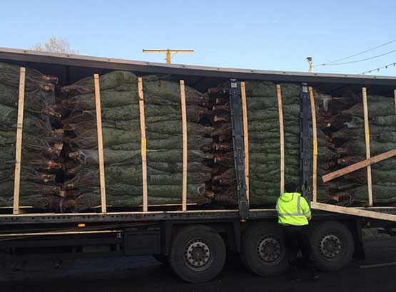 Wholesale Christmas Tree order ready to leave Christmas Tree Distribution Depot