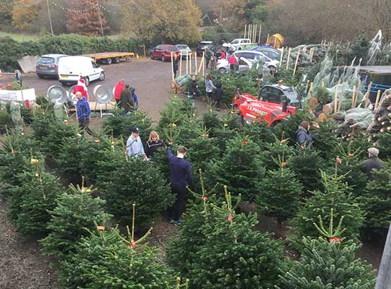 Customers at our Christmas Tree Distribution Centre