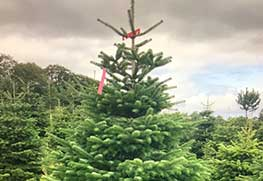 Christmas Tree Specialists Gallery-19