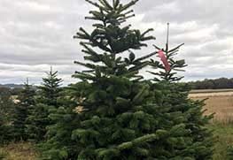 Christmas Tree Specialists Gallery-20