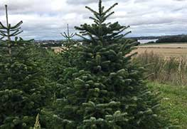Christmas Tree Specialists Gallery-23