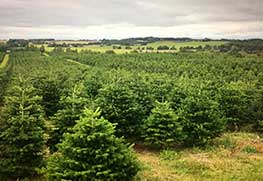 Christmas Tree Specialists Gallery-5