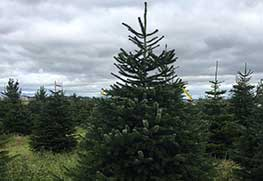 Christmas Tree Specialists Gallery-8