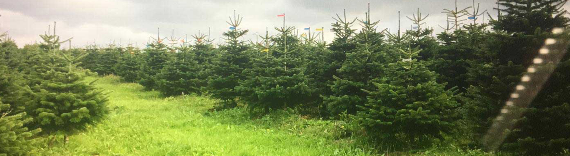 Christmas Tree Specialists Image